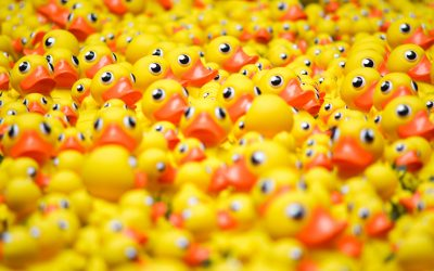 The Rubber Duck Club